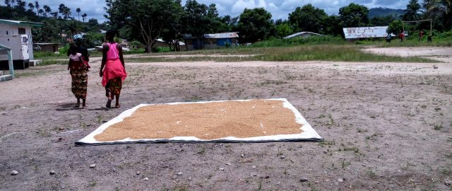 Rice drying in Nimba County, Liberia and how the LADA will affec (deleted da5b694d09d7df119498bb5166774865)