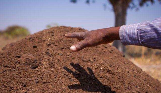 CNFA_Chinyanja_Triangle_Soil_Fertility_Project_Banner