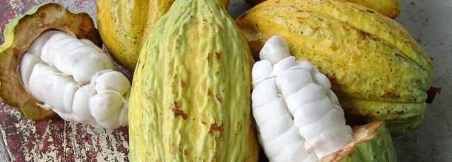 CNFA_Commercial_Strengthening_of_Smallholder_Cocoa_Production_Banner