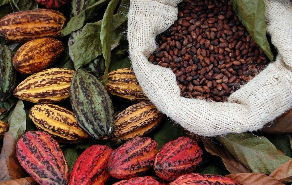 CNFA-Implemented Cocoa Initiative to Collaborate with Blommer Chocolate Co. in Côte d'Ivoire