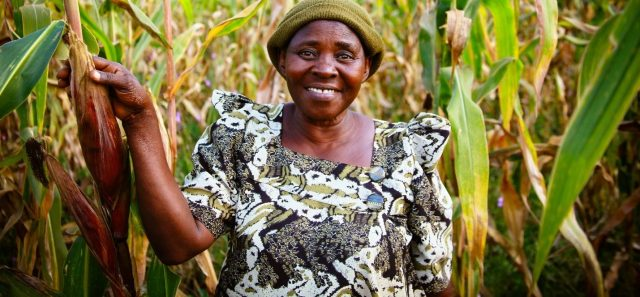 Image - Feed the Future and Nestlé Maize Quality Improvement Partnership