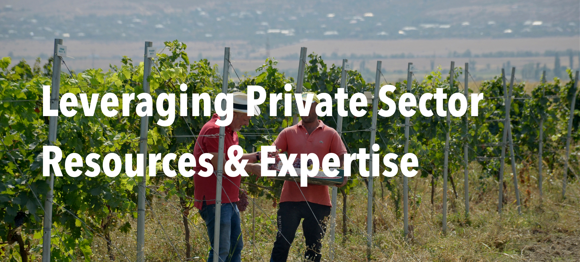 """Two men in a vineyard with the header text """"Leveraging Private Sector Resources & Expertise"""""""