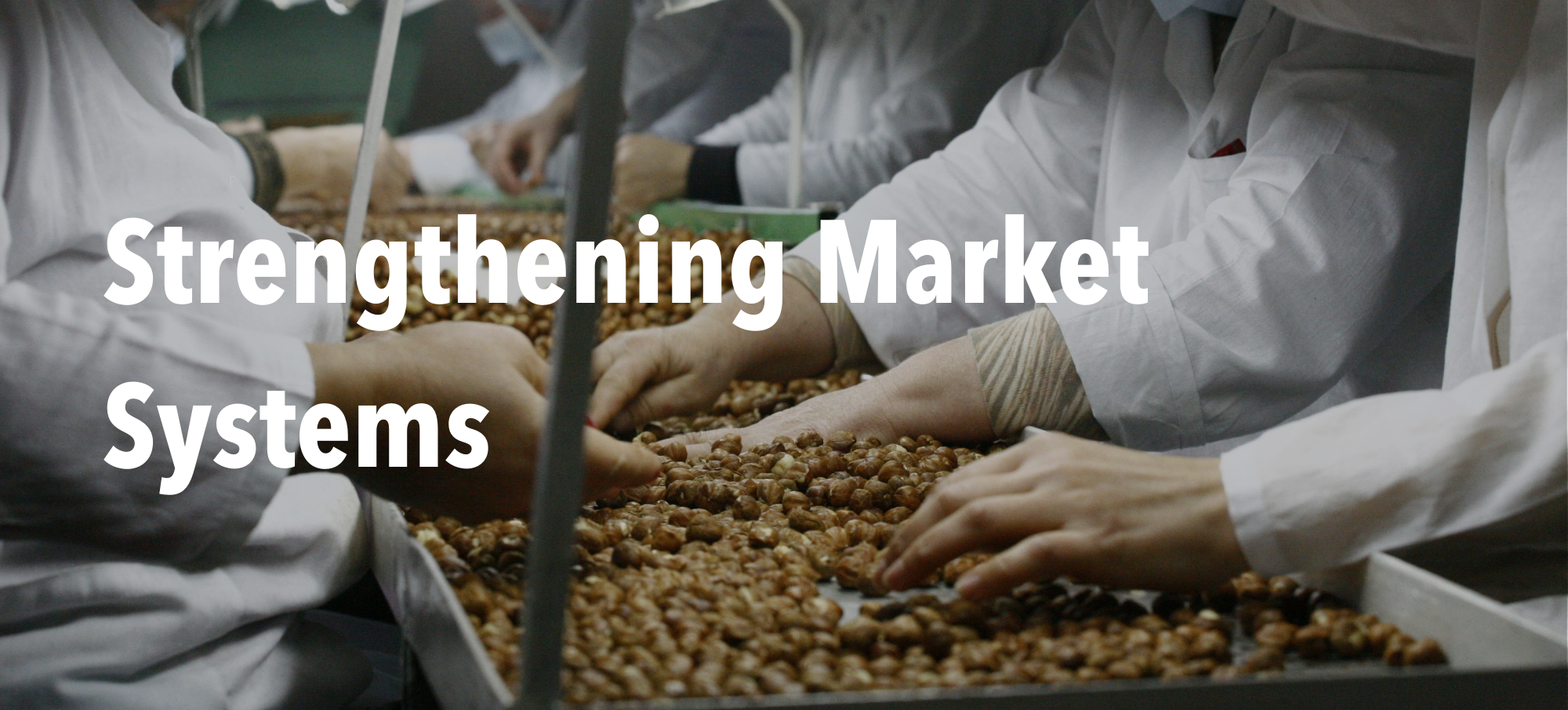 """Hazelnut processing facility with header text """"Strengthening Market Systems"""""""